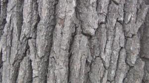 tree bark fractal